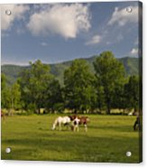 Cades Cove Horses In Smoky Mountains Tennessee Usa Acrylic Print