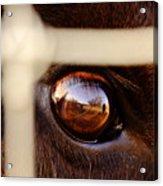 Caged Buffalo Reflects Acrylic Print