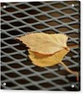 Caged Leaf Acrylic Print