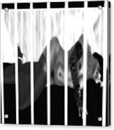 Caged Acrylic Print by Theda Tammas