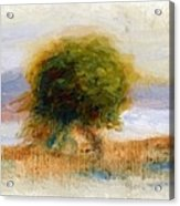 Cagnes Landscape 1910 Acrylic Print