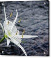 Cahaba Lily #1 Acrylic Print