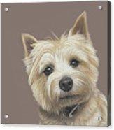 Cairn Terrier - Dave Acrylic Print