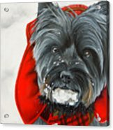 Cairn Terrier In The Snow Acrylic Print