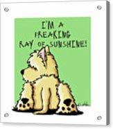 Cairn Terrier Sunshine Acrylic Print