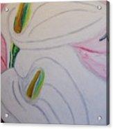 Cala Lillies Acrylic Print