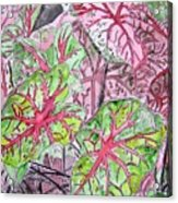 Caladiums Tropical Plant Art Acrylic Print