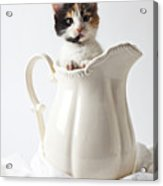 Calico Kitten In White Pitcher Acrylic Print