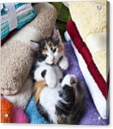 Calico Kitten On Towels Acrylic Print by Garry Gay