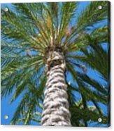 California Acrylic Print