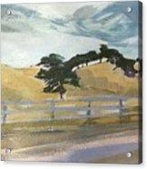 California East Bay Oaks Acrylic Print