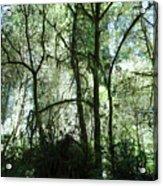 California Jungle Acrylic Print