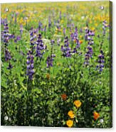 California Meadow Acrylic Print