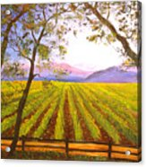 California Napa Valley Vineyard Acrylic Print