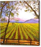 California Napa Valley Vineyard Acrylic Print by Connie Tom