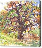 California Oak In Winter Acrylic Print