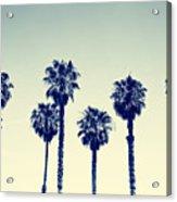 California Palm Trees Acrylic Print