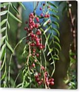California Pepper Tree Leaves Berries I Acrylic Print