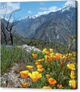 California Poppy And Mountain Panorama Acrylic Print