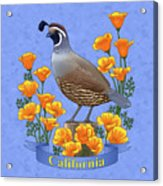 California Quail And Golden Poppies Acrylic Print by Crista Forest