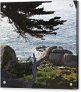 California Shade Acrylic Print