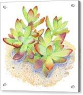 California Sunset Succulent Acrylic Print