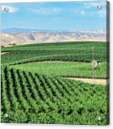 California Vineyards 1 Acrylic Print