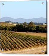 California Vineyards Acrylic Print