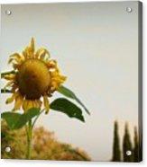Californian Tuscany Acrylic Print