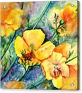 California's Poppies Acrylic Print