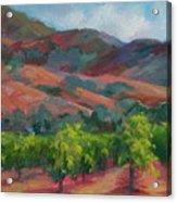 Calistoga Vineyards  Acrylic Print