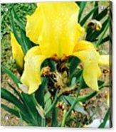 Call Me Yellow Acrylic Print