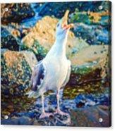 Call Of The Gull Acrylic Print