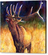 Call Of The Wild Elk Acrylic Print
