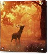Call Of The Wild Acrylic Print