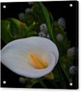 Calla In The Garden II Acrylic Print