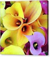 Calla Lilies Acrylic Print