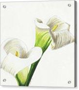 Calla Lilies No 1 Acrylic Print