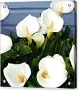 Calla Lilies- Oregon Acrylic Print