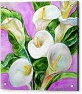 Calla Lillies 3 Acrylic Print