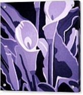 Calla Lillies Lavender Acrylic Print