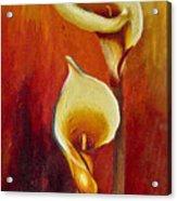Calla Lilly Part A Acrylic Print