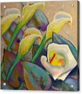 Calla Lily Design Acrylic Print