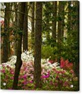 Callaway Gardens Spring Azaleas Acrylic Print