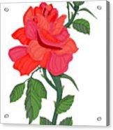 Calypso Rose Acrylic Print