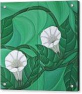 Calystgia Sepium  Acrylic Print