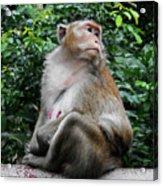 Cambodia Monkeys 2 Acrylic Print