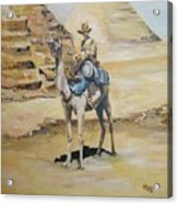 Camel Corp At Ease Acrylic Print by Leonie Bell