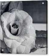 Camellia Back And White Acrylic Print