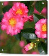 Camellia Pink Acrylic Print